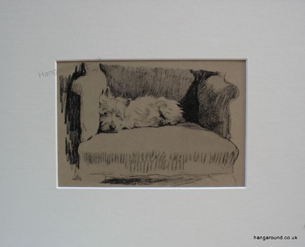 Westie  lying on a chair with one eye closed - Wes A2  1930's print by Cecil Aldin